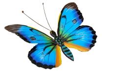 mariposa-011